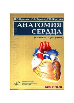 Анатомия сердца. В схемах и рисунках