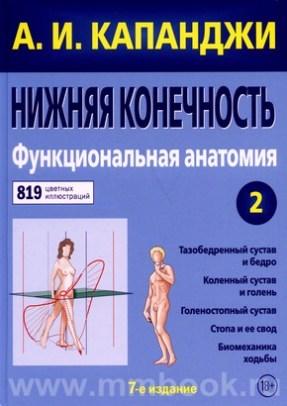 Нижняя конечность : Функциональная анатомия